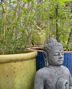 Phyllostachys Bamboo Portland Nursery