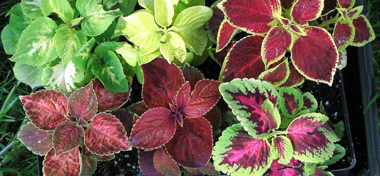 Bedding Plants For Shade And Sun At, What Is Meant By Bedding Plants