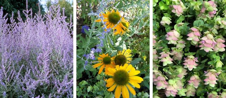 Drought Tolerant Plantings | Portland Nursery