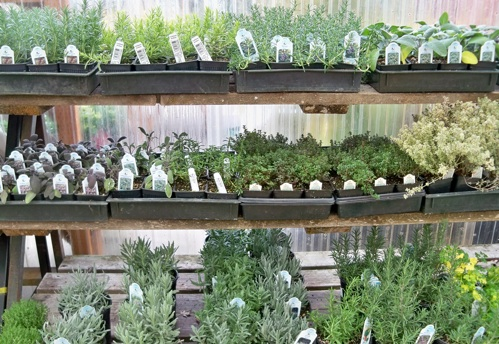 Herbs That Can Be Grown Indoors