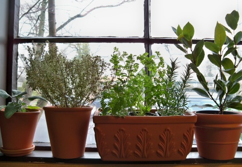 Indoor Herb Gardening