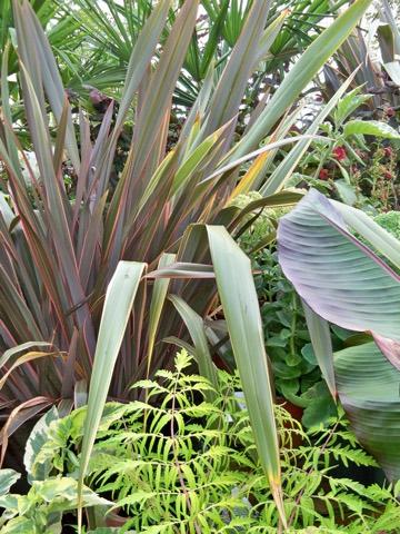 Phormium New Zealand Flax Portland Nursery