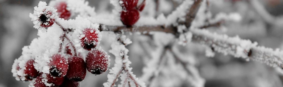 Natives for Winter Interest