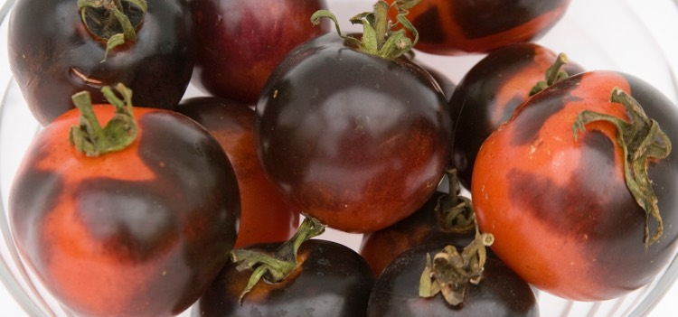 Tomatoes | Portland Nursery