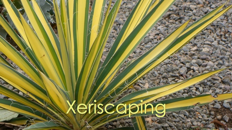 xeriscapinghd